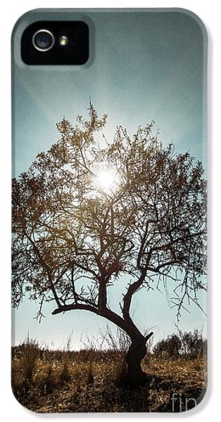 Beautiful Day iPhone 5 Cases - Single Tree iPhone 5 Case by Carlos Caetano