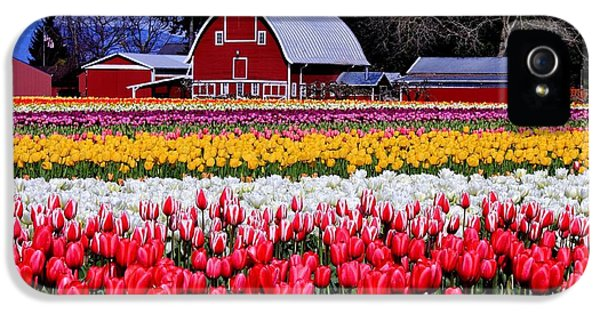 Tulips iPhone 5 Cases - Skagit Valley iPhone 5 Case by Benjamin Yeager