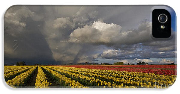 Tulips iPhone 5 Cases - Skagit Valley Storm iPhone 5 Case by Mike Reid
