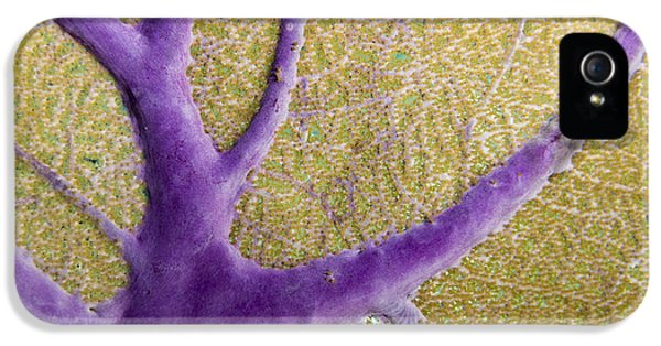 Polyp iPhone 5 Cases - Skeletal System of a Sea Fan iPhone 5 Case by Jean Noren