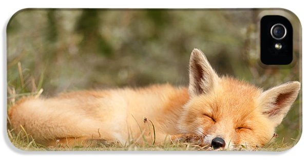 Juvenile iPhone 5 Cases - Sleeping Cuty _ Red Fox Kit iPhone 5 Case by Roeselien Raimond