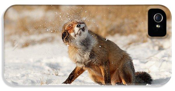 Juvenile iPhone 5 Cases - Slush Puppy Red Fox in The SNow iPhone 5 Case by Roeselien Raimond