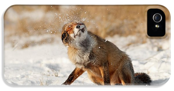 Fox Kits iPhone 5 Cases - Slush Puppy Red Fox in The SNow iPhone 5 Case by Roeselien Raimond