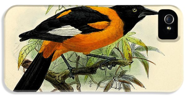 Small Oriole IPhone 5 / 5s Case by J G Keulemans