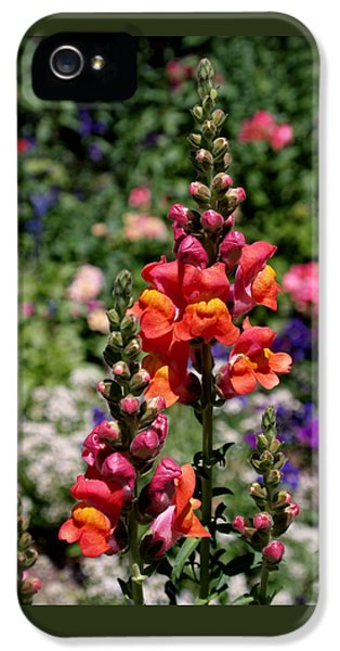 Garden iPhone 5 Cases - Snapdragons iPhone 5 Case by Rona Black