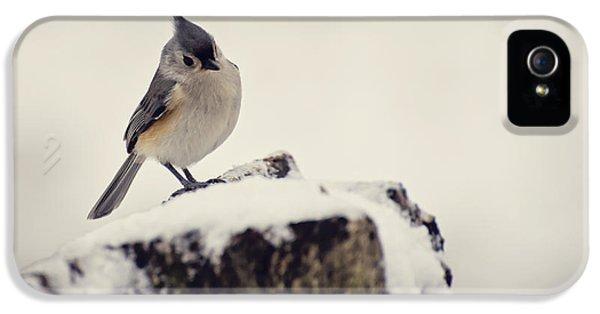 Bird Watcher iPhone 5 Cases - Snow Bird iPhone 5 Case by Heather Applegate