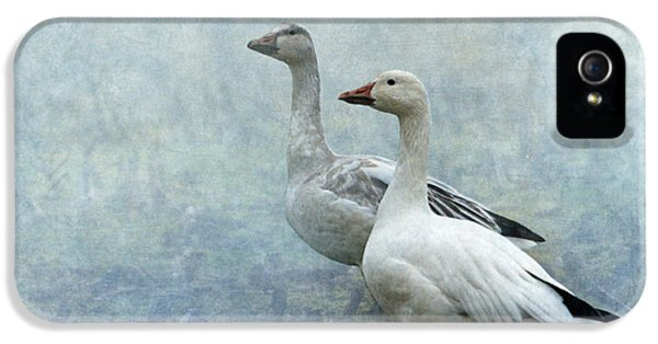 Snow Geese IPhone 5 / 5s Case by Angie Vogel