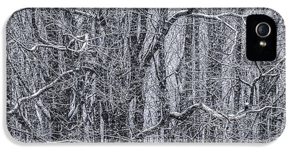 Black Snow iPhone 5 Cases - Snow in the Forest iPhone 5 Case by Diane Diederich