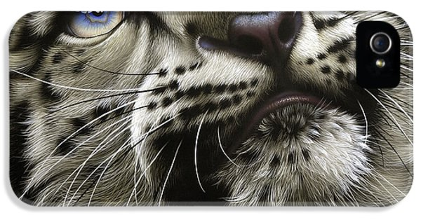Cubs iPhone 5 Cases - Snow Leopard Cub iPhone 5 Case by Jurek Zamoyski