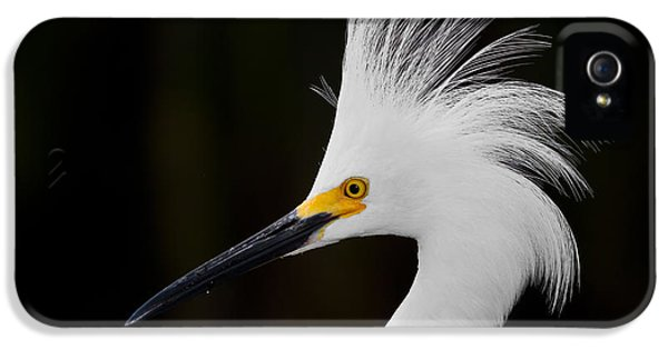 Water iPhone 5 Cases - Snowy Egret Crown iPhone 5 Case by Andres Leon