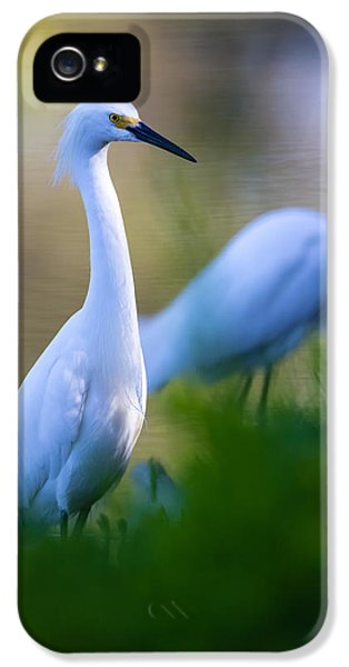 United States iPhone 5 Cases - Snowy Egret on a lush green foreground iPhone 5 Case by Andres Leon