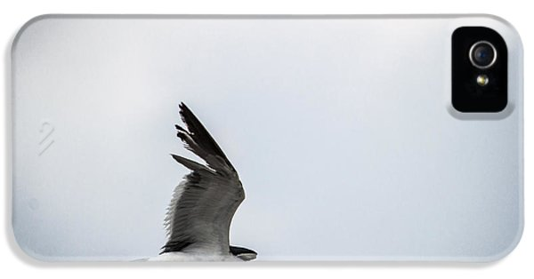 Wednesday iPhone 5 Cases - Soaring into the Storm iPhone 5 Case by Shelby  Young