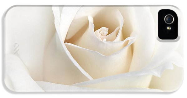 Ivory Rose iPhone 5 Cases - Soft Ivory Rose Flower iPhone 5 Case by Jennie Marie Schell