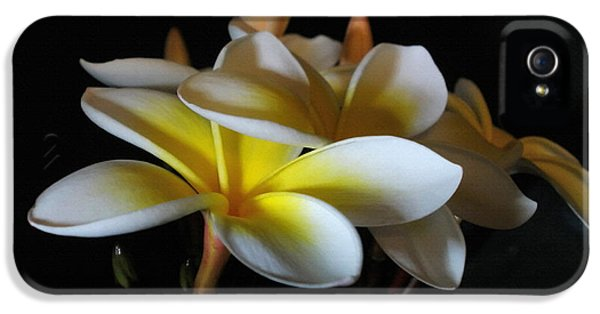 Yellow And White Plumeria Flower Frangipani iPhone 5 Cases - Soft light on Plumeria iPhone 5 Case by Kaye Menner