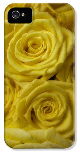 Soft iPhone 5 Cases - Soft Yellow Roses iPhone 5 Case by Garry Gay