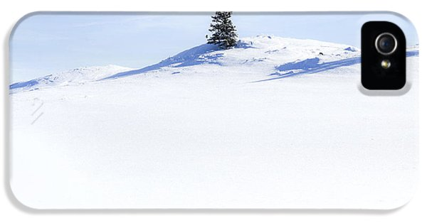 Snow iPhone 5 Cases - Solitary iPhone 5 Case by Theresa Tahara