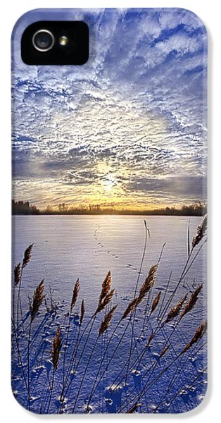 Blue Leaf iPhone 5 Cases - Songs of Surrender iPhone 5 Case by Phil Koch