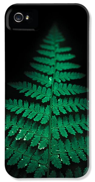 Fern iPhone 5 Cases - Soothing Fern iPhone 5 Case by Shane Holsclaw