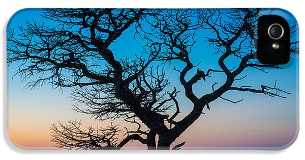 Epic iPhone 5 Cases - South Rim Tree iPhone 5 Case by Inge Johnsson