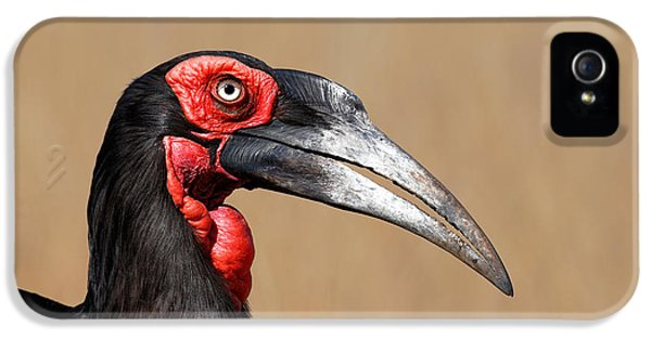 Beak iPhone 5 Cases - Southern Ground Hornbill portrait side view iPhone 5 Case by Johan Swanepoel