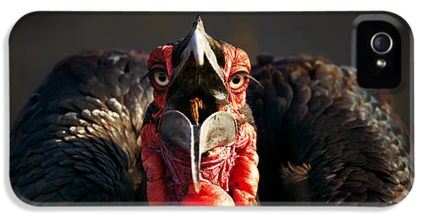 Beak iPhone 5 Cases - Southern Ground Hornbill swallowing a seed iPhone 5 Case by Johan Swanepoel