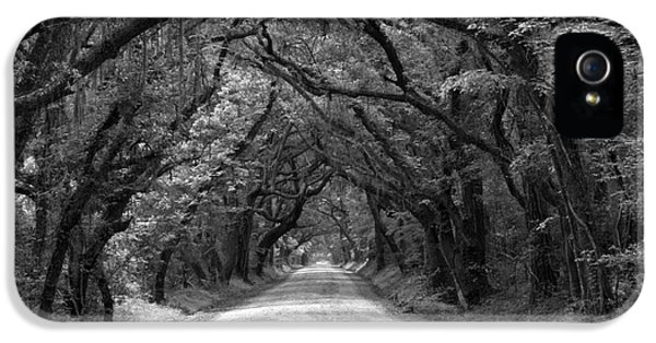 Historic Oak iPhone 5 Cases - Southern Oak Avenue In Black And White iPhone 5 Case by Adam Jewell