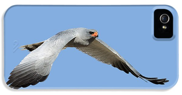 Prey iPhone 5 Cases - Southern Pale Chanting Goshawk in flight iPhone 5 Case by Johan Swanepoel