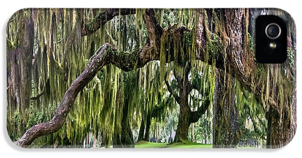 Historic Oak iPhone 5 Cases - Spanish Moss iPhone 5 Case by Debra and Dave Vanderlaan
