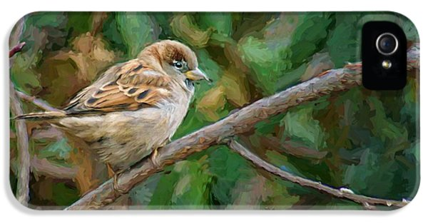 Passeridae iPhone 5 Cases - Sparrow in Winter iPhone 5 Case by Nikolyn McDonald