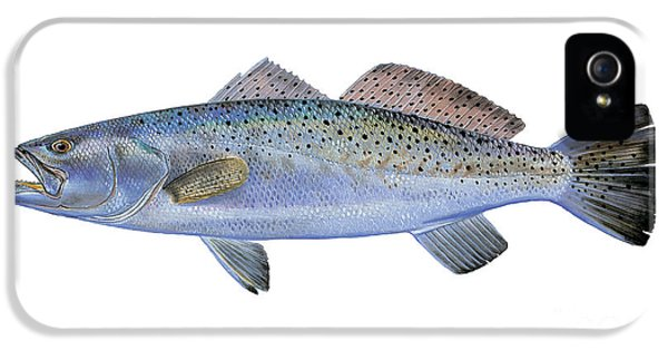 Speckled Trout IPhone 5 / 5s Case by Carey Chen