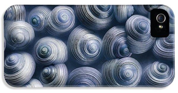 Still-life iPhone 5 Cases - Spirals Blue iPhone 5 Case by Priska Wettstein