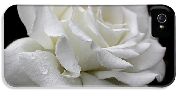 Ivory Rose iPhone 5 Cases - Splendor of a White Rose Flower  iPhone 5 Case by Jennie Marie Schell