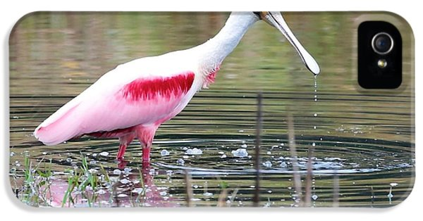 Spoonbill In The Pond IPhone 5 / 5s Case by Carol Groenen