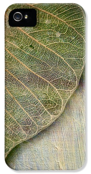 Leaf iPhone 5 Cases - Spring Leaf iPhone 5 Case by Bonnie Bruno