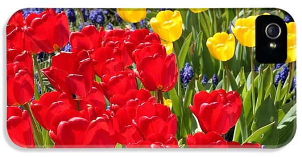 Spring Sunshine IPhone 5 / 5s Case by Carol Groenen