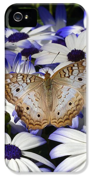 Cone Flowers And Butterflies iPhone 5 Cases - Springtime in the Desert iPhone 5 Case by Cindy McDaniel