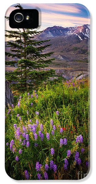 National Monuments iPhone 5 Cases - St Helens Caldera iPhone 5 Case by Inge Johnsson