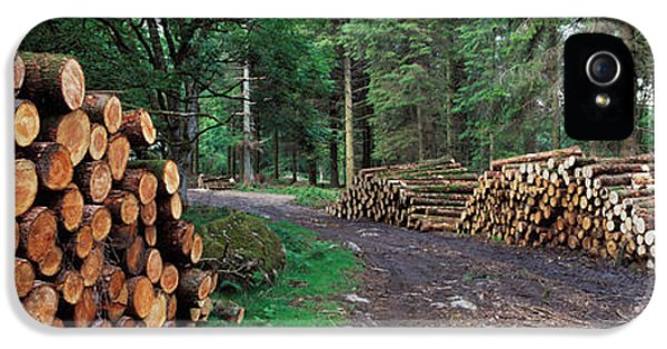 Firewood iPhone 5 Cases - Stacks Of Logs In Forest, Burrator iPhone 5 Case by Panoramic Images