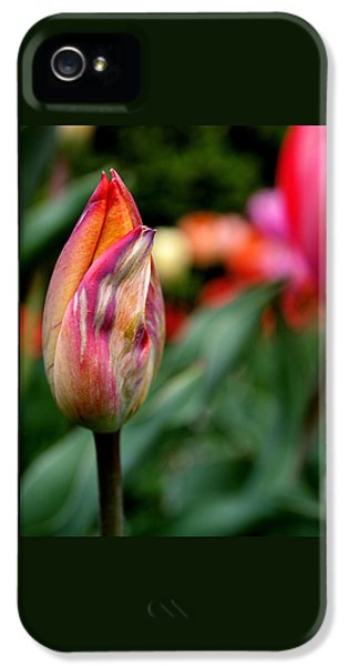 Tulips iPhone 5 Cases - Standout iPhone 5 Case by Rona Black