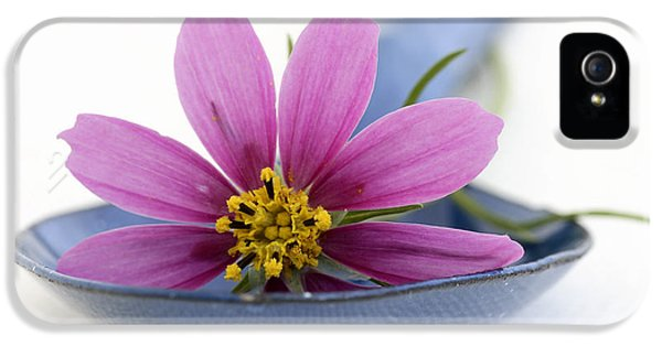Pharmaceutical iPhone 5 Cases - Still Life With Pink Flower On A Blue Spoon iPhone 5 Case by Frank Tschakert