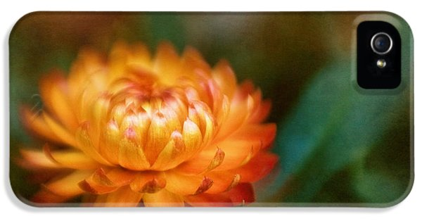 Lensbaby Macro iPhone 5 Cases - Strawflower I iPhone 5 Case by David and Carol Kelly