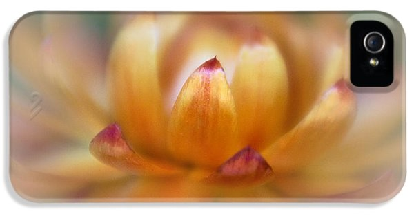 Lensbaby Macro iPhone 5 Cases - Strawflower II iPhone 5 Case by David and Carol Kelly