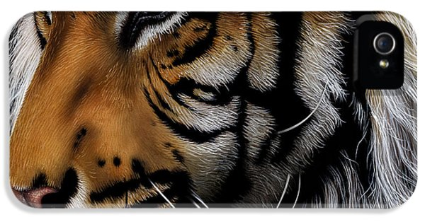 Sumatran Tiger Profile IPhone 5 / 5s Case by Jurek Zamoyski