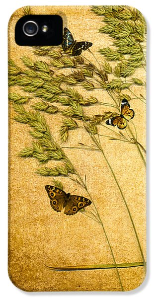 Bug iPhone 5 Cases - Summer Meadow iPhone 5 Case by Jan Bickerton