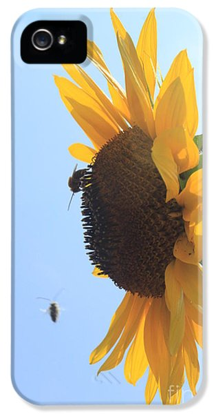 Lotus iPhone 5 Cases - Sunflower with Visitors iPhone 5 Case by Lotus