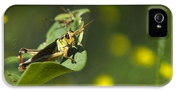 Sunny Green Grasshopper IPhone 5 / 5s Case by Christina Rollo