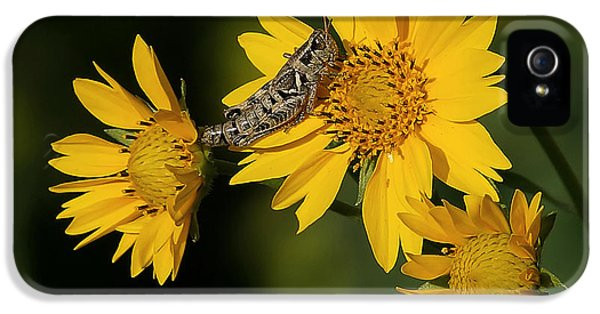 Sunny Hopper IPhone 5 / 5s Case by Ernie Echols