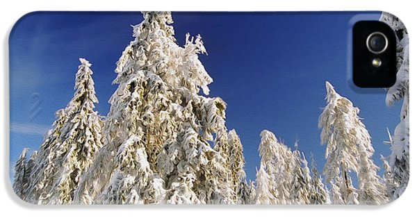 Forrest iPhone 5 Cases - Sunny Winter Day iPhone 5 Case by Aged Pixel