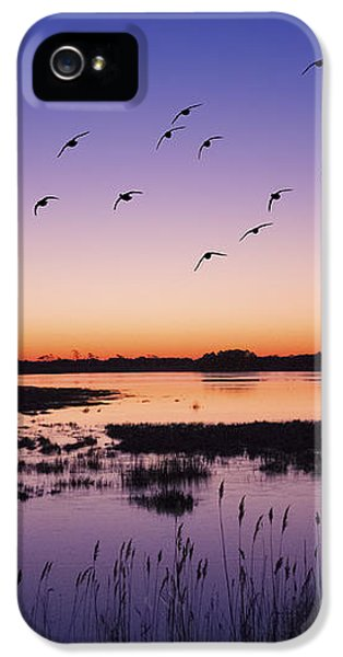 Sunrise At Assateague - Wetlands - Silhouette  IPhone 5 / 5s Case by Shara Lee