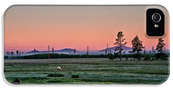 Pink Sunrise iPhone 5 Cases - Sunrise in the Meadow iPhone 5 Case by Cat Connor